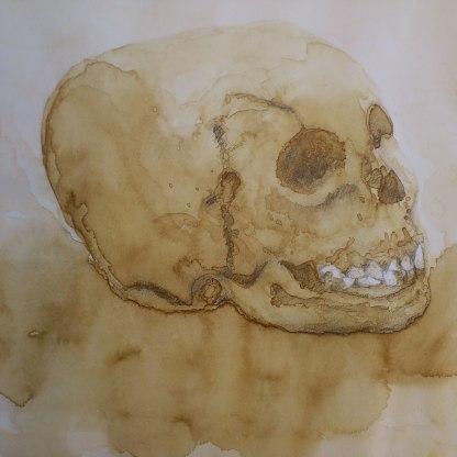 Cráneo - Café y toques de lápiz 32x24 cm.