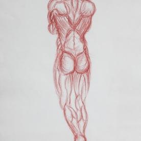 Anatm17 - Lápiz 30x42 cm.