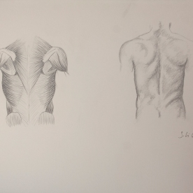 Anatm4 - Lápiz 42x30 cm.