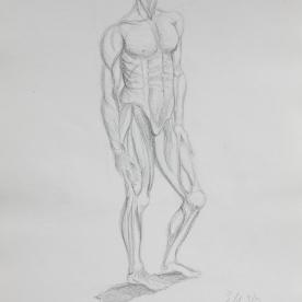 Anatm9 - Lápiz 30x42 cm.